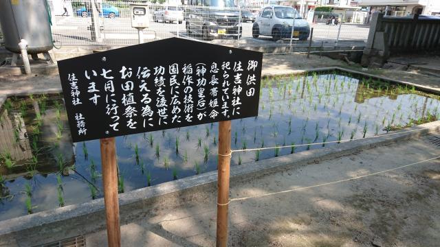 住吉神社(山梨県甲斐住吉駅) - 自然の写真