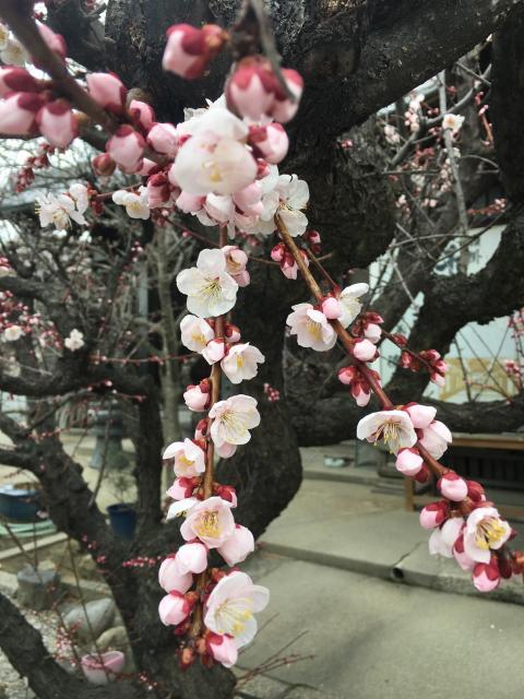徳正寺の自然