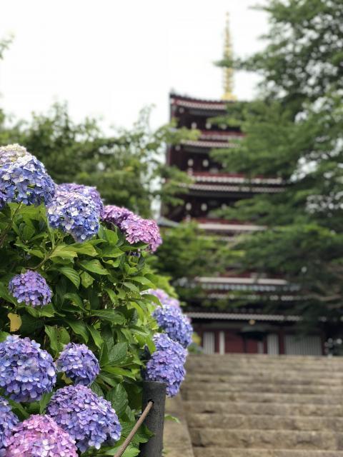 本土寺の建物その他