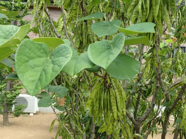七座下稲荷神社の自然