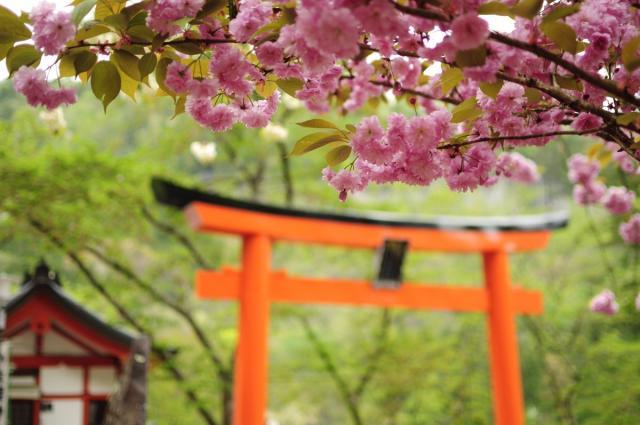 群馬県上野総社神社の鳥居
