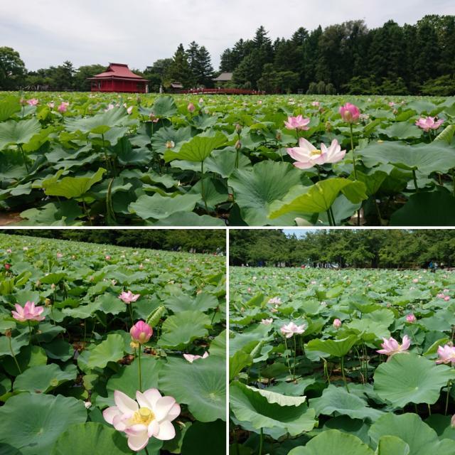 猿賀神社の庭園