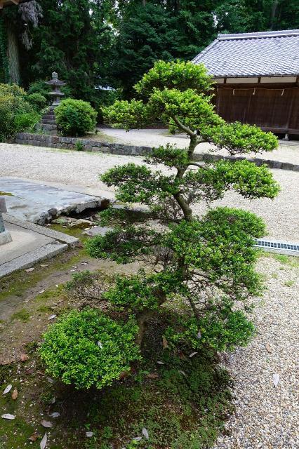 都祁水分神社の自然