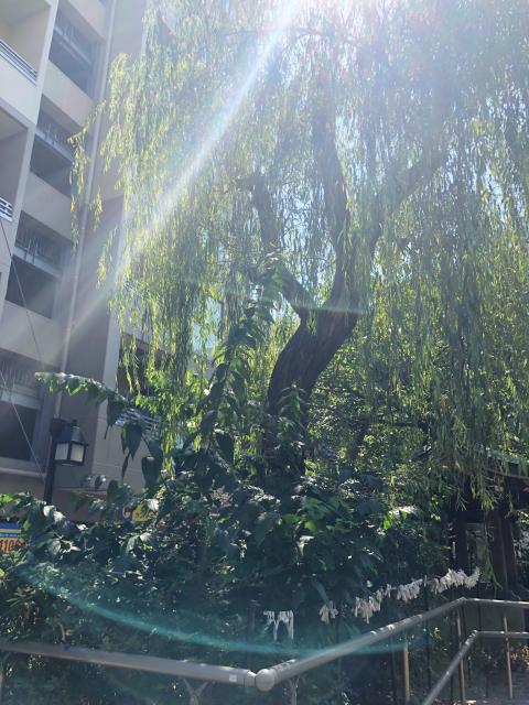 白龍神社の周辺