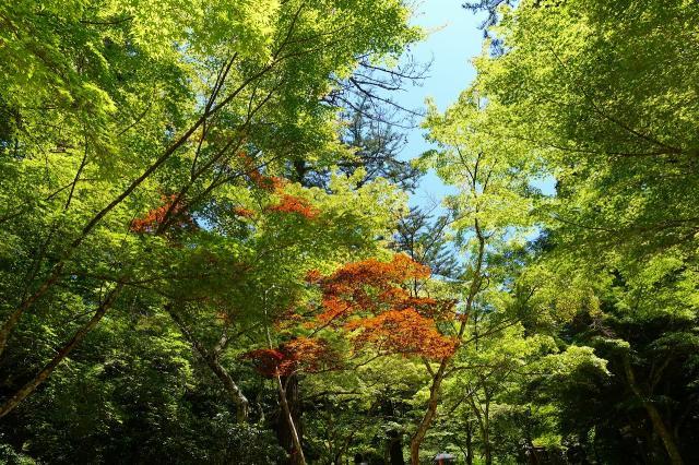 四宮神社の自然