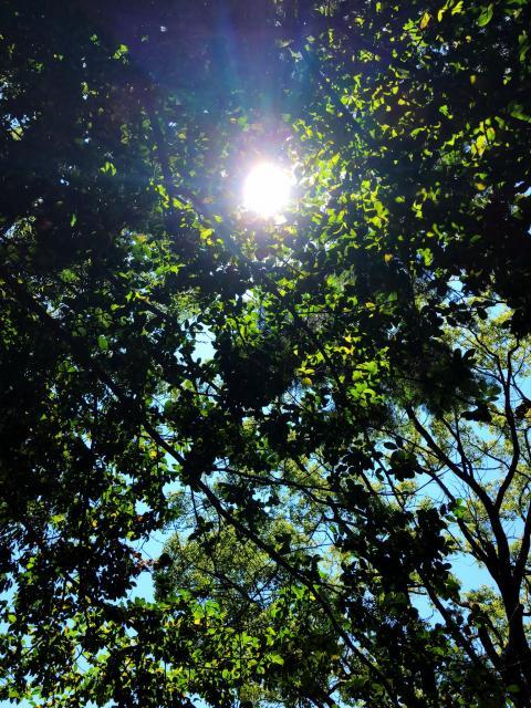 新溝神社の自然