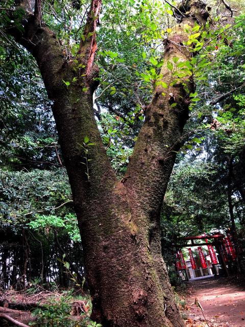 手力雄神社の自然