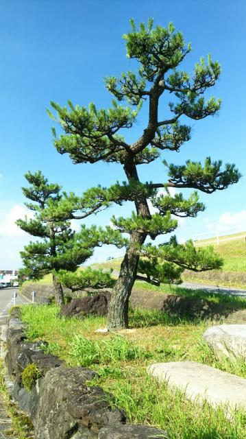 岐阜県名木林神社の周辺