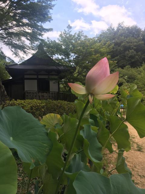 大阪府施福寺の庭園