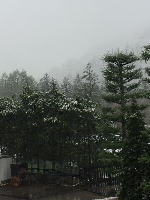 岐阜県平湯神社の自然