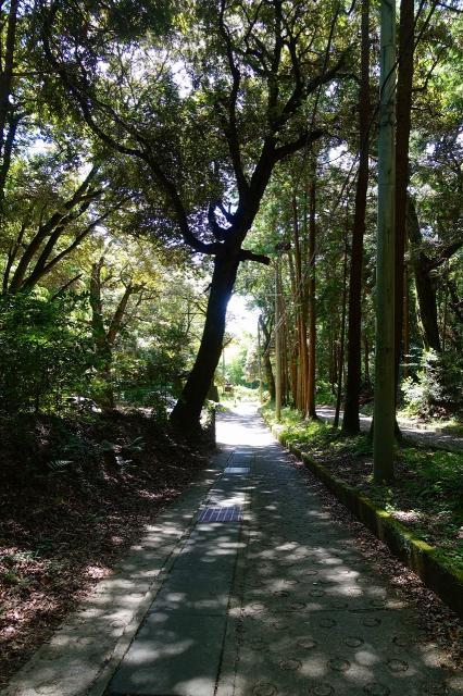大阪府若山神社の写真