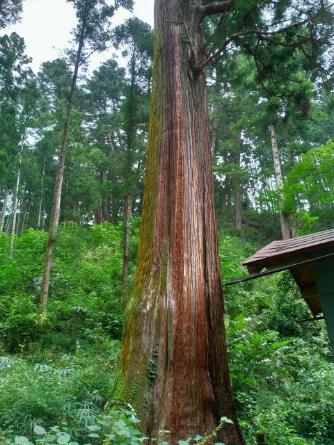 吾妻神社の自然