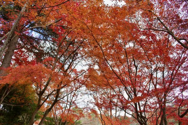 京都府総神寺の自然