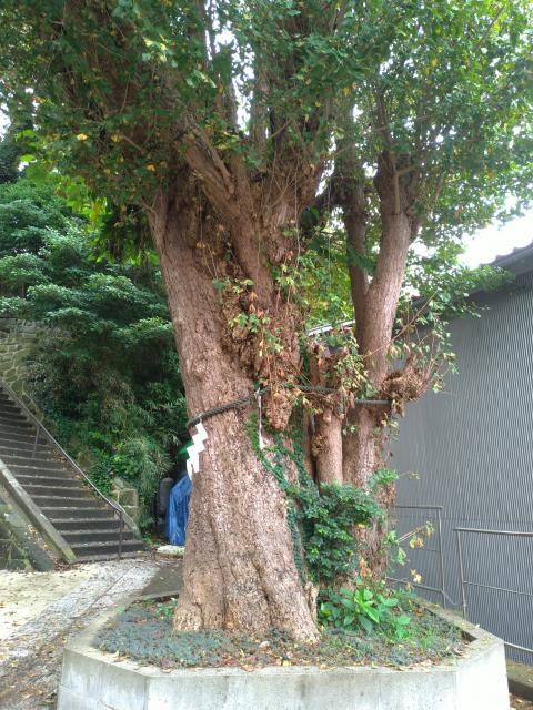 神奈川県住吉神社の建物その他