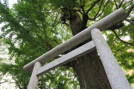朝日氷川神社の鳥居