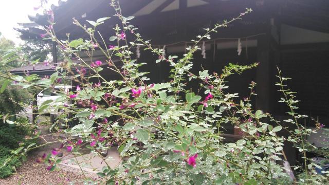 梨木神社の自然