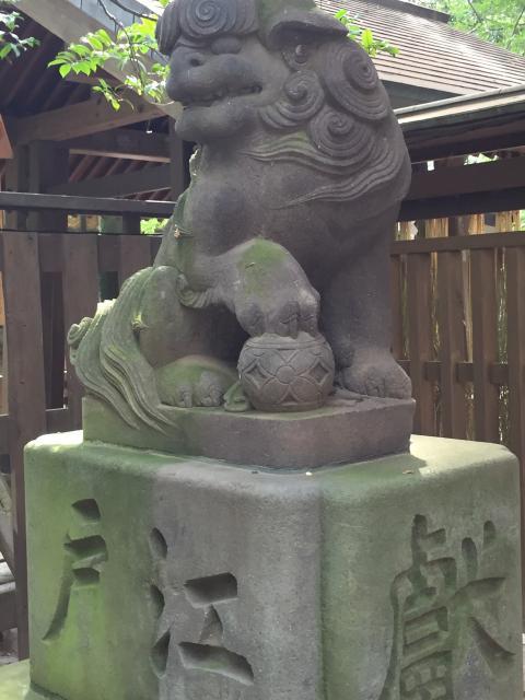 諏訪神社(駒木諏訪神社)の狛犬