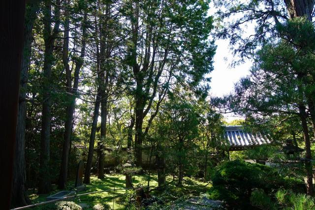 善慧院の庭園