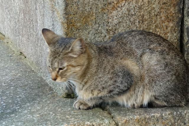 大阪府瓢箪山稲荷神社の動物