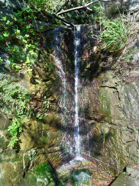 高養寺の自然