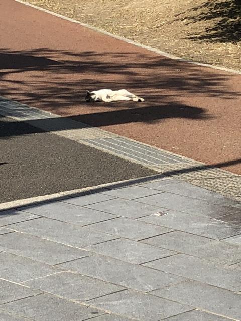 櫻岡大神宮の動物