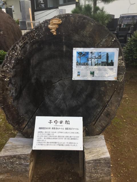 静岡県誓欣院の写真