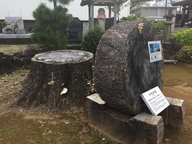静岡県誓欣院の建物その他
