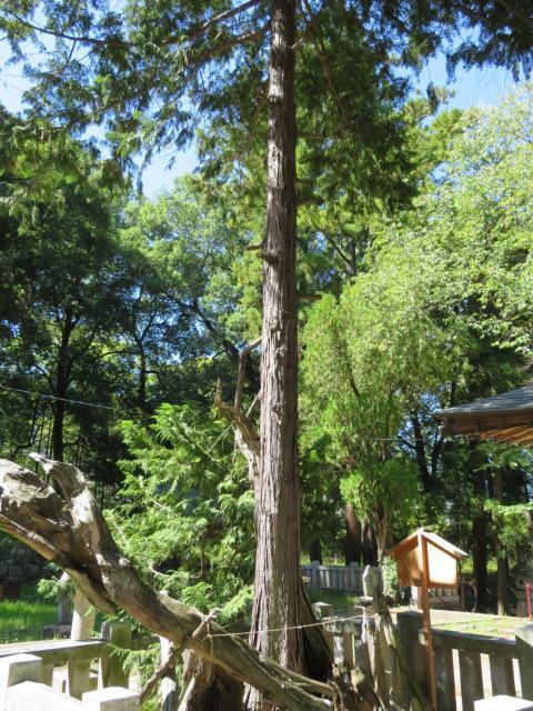 弓削神社の建物その他