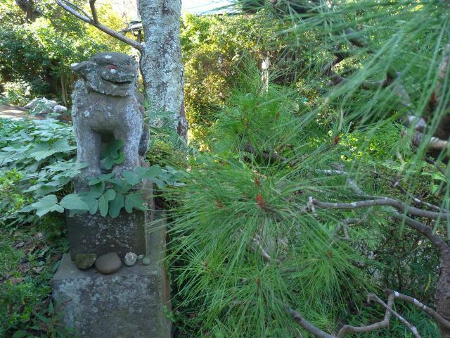 神奈川県衣笠神社の狛犬
