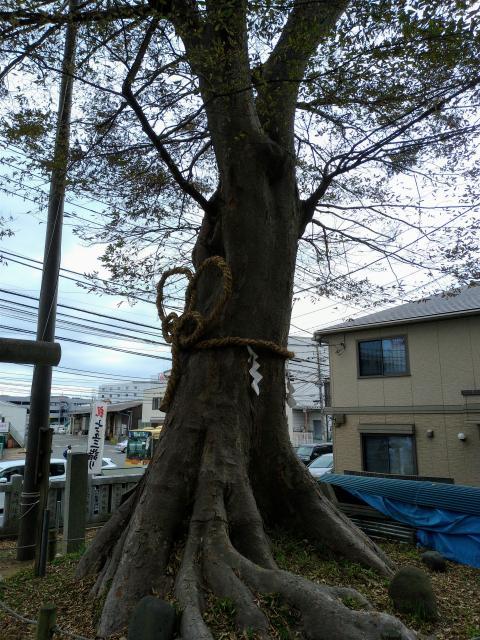 神奈川県白旗神社の自然