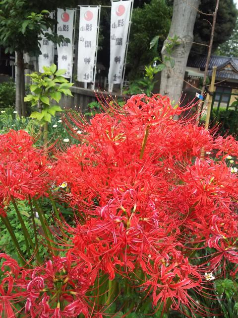 千葉県浅間神社の自然