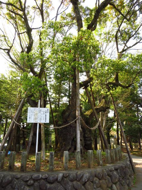 廣瀬神社の庭園