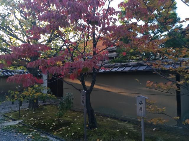 大仙院の近くの神社お寺|大徳寺