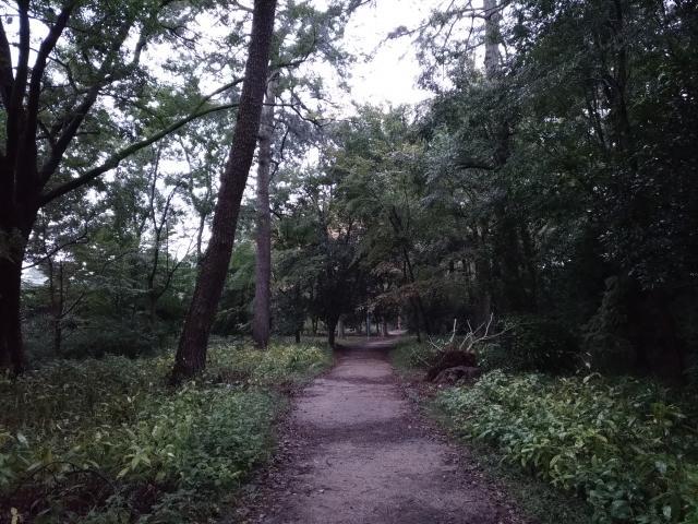 梨木神社の周辺