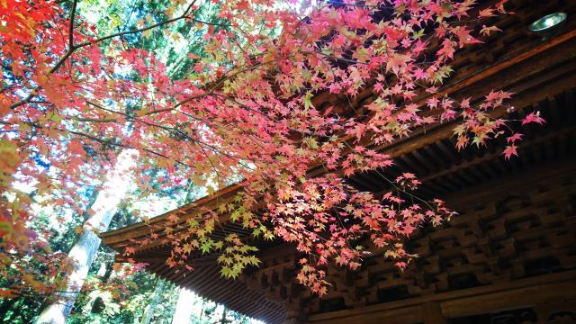 長野県宝積山 光前寺の本殿