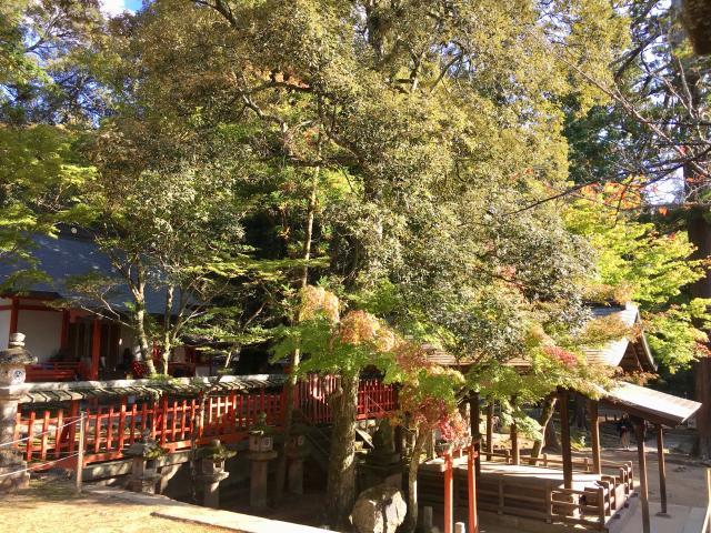 手向山八幡宮の庭園