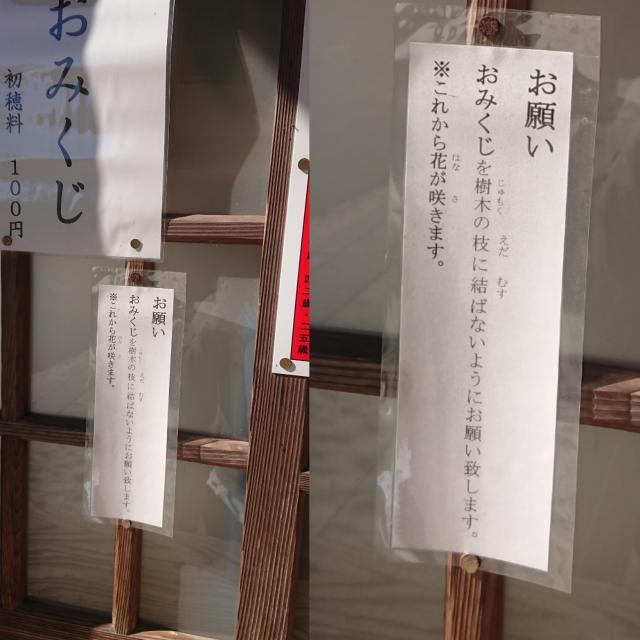 佐賀県八天神社のおみくじ