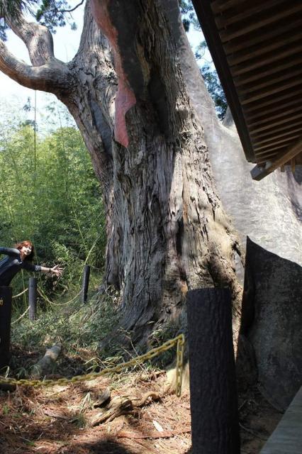 八幡神社の自然