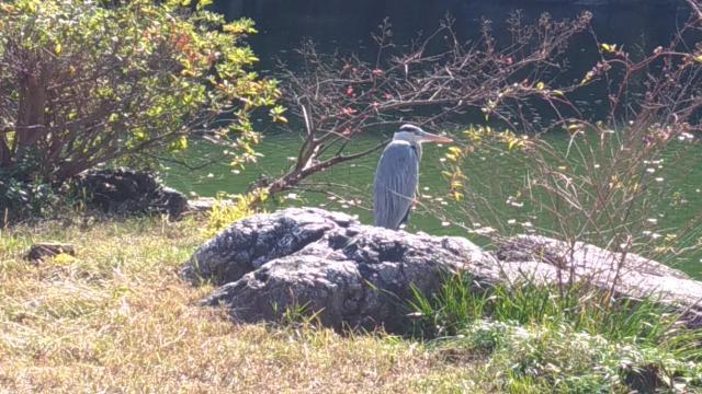厳島神社の動物