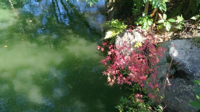 厳島神社の庭園