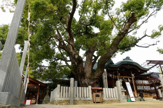 石切劔箭神社(大阪府新石切駅) - 自然の写真