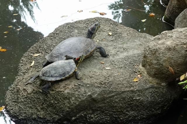 石切劔箭神社(大阪府新石切駅) - 動物の写真