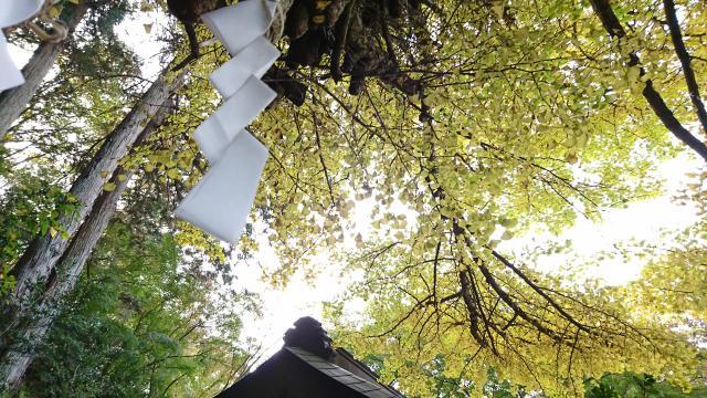 水使神社の自然