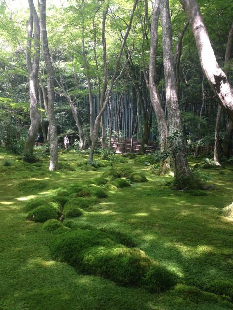 京都府祇王寺の庭園