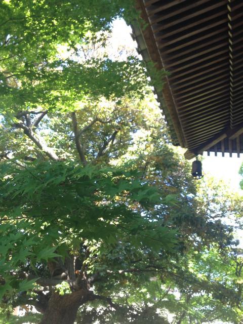 大雲寺の自然