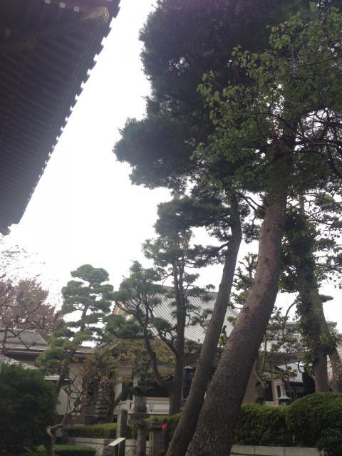 荘厳寺の庭園