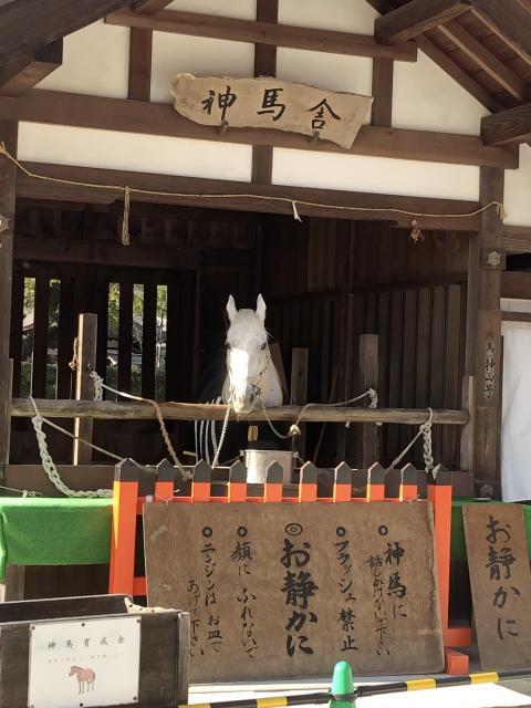 賀茂別雷神社(上賀茂神社)の動物