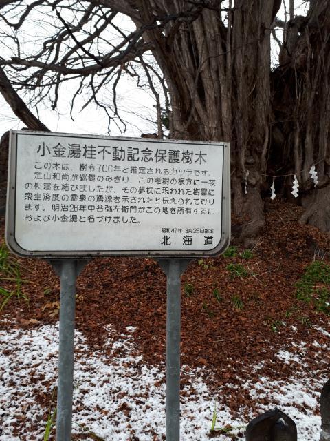 黄金龍神社(桂不動)の歴史