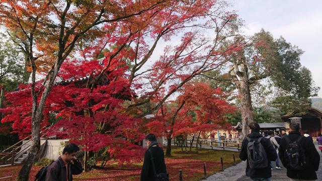 鹿苑寺(金閣寺)(京都府北野白梅町駅) - 庭園の写真