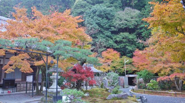 高徳庵の庭園